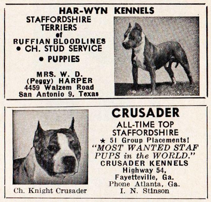 Old Akc Ad Bully Breeds Vintage Dog Pitbulls
