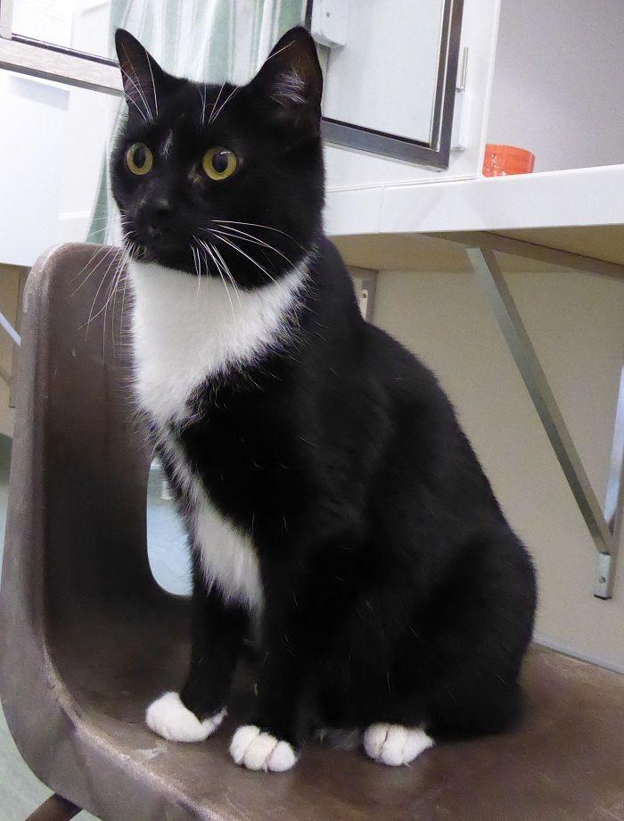 RSPCA Little Valley Animal Shelter Exeter Devon Adopt A