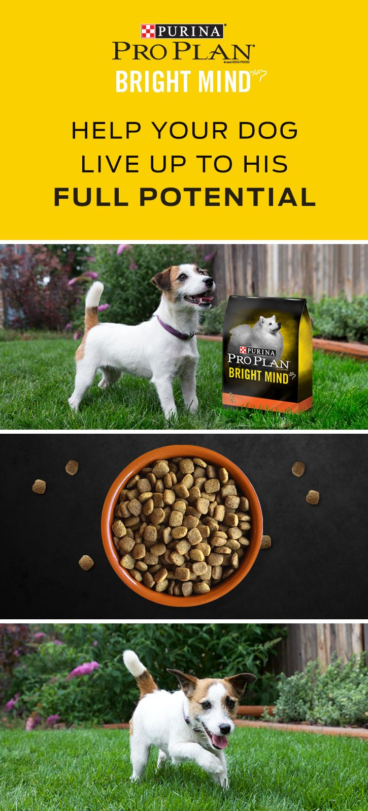 Buy One Of Our Purina Pro Plan Bright Mind Adult Formulas For Your Dog Today Our Bright Mind Adult Formulas Contain A Propr Dogs Dog Food Recipes Dry Dog Food