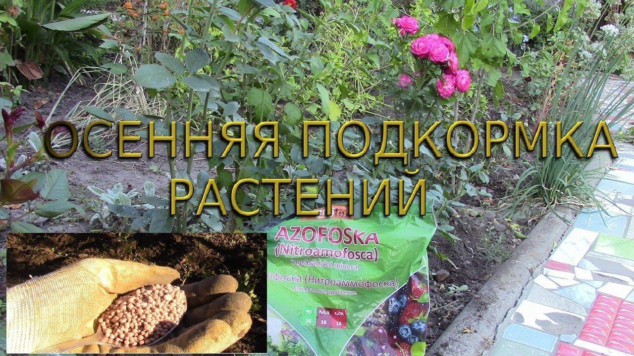 ОСЕННЯЯ ПОДКОРМКА РАСТЕНИЙ В САДУ.   Растения, Кустарники, Сад