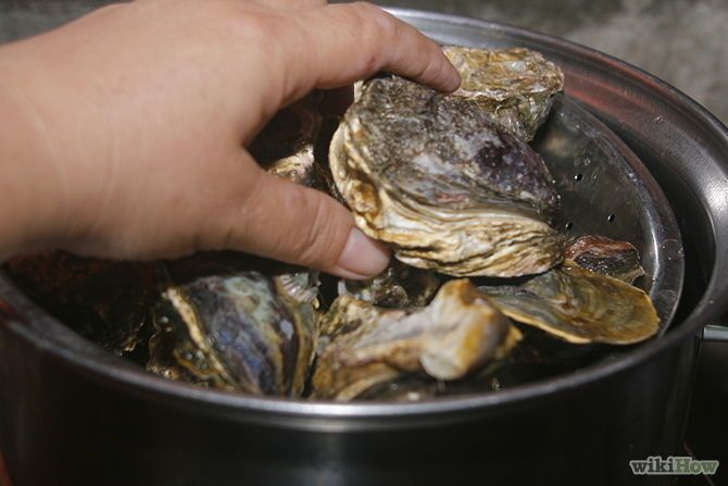 How to steam oysters