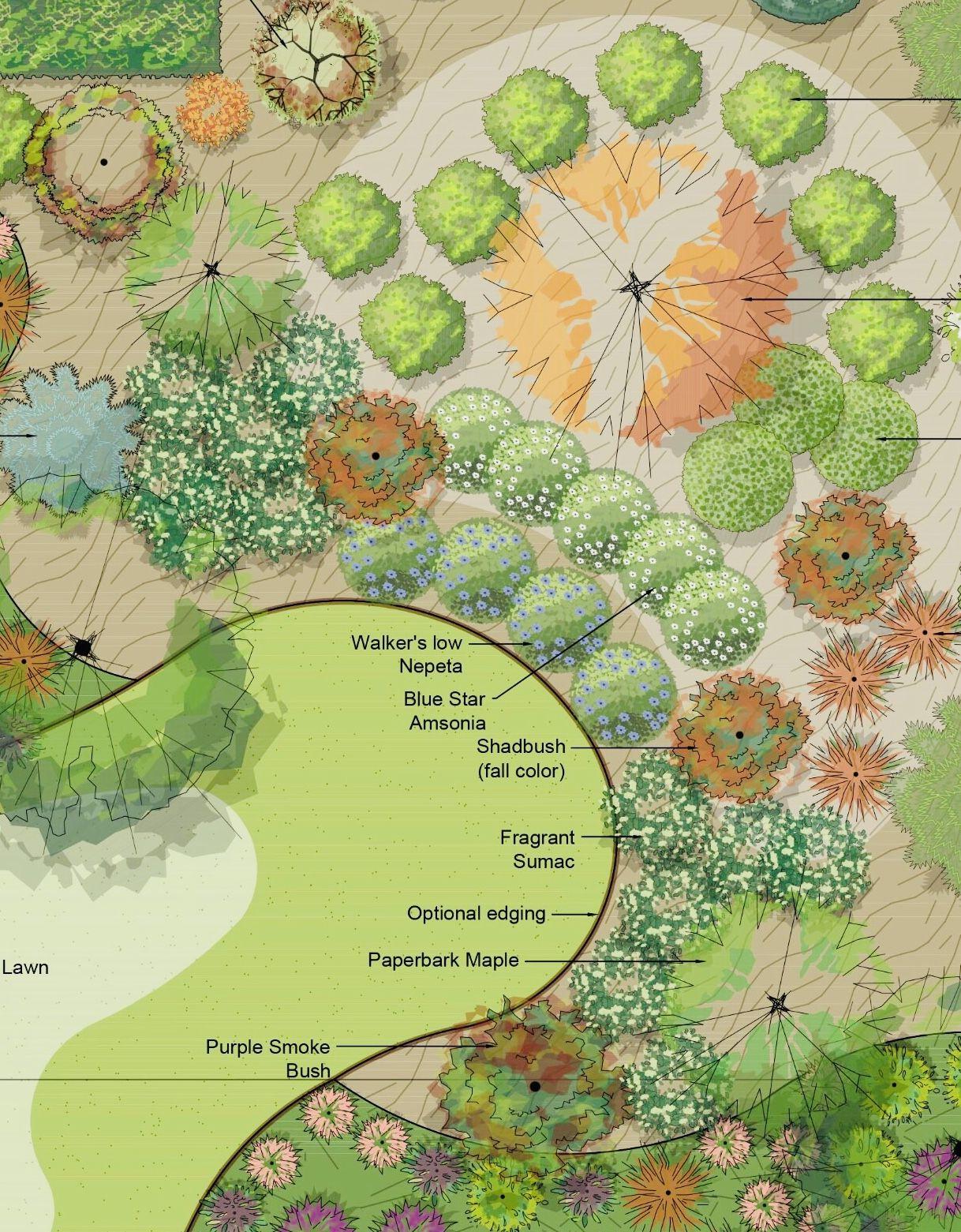 In The Landscape In 2020 Landscape Smoke Bush Missouri Botanical Garden