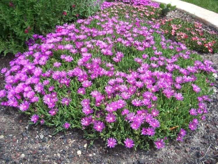 Quelles plantes pour son jardin sec id es et conseils utiles plantes et jardin pinterest - Quelles plantes pour jardin zen ...