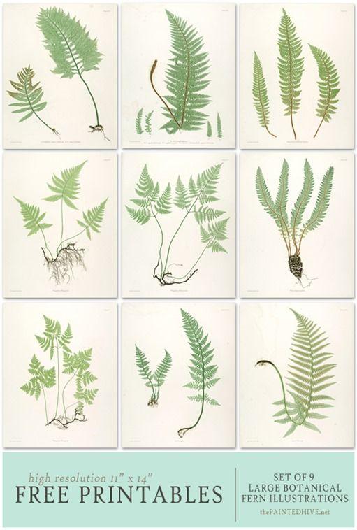 impresiones de helechos descarga gratis | Plantas | Pinterest ...