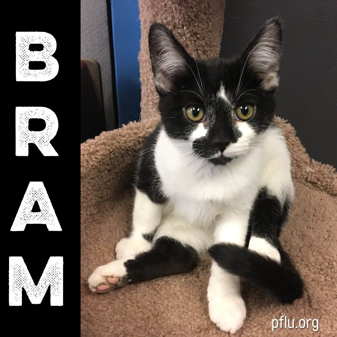 Yoga Cats Bram The Kitten Knows Its Caturday And Hes Showing Everyone How To Cat Or Maybe Hes Trying To Be A Spider Cats Cat Yoga How To Cat