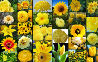 Types of yellow flowers google search upcoming wedding types of yellow flowers google search mightylinksfo