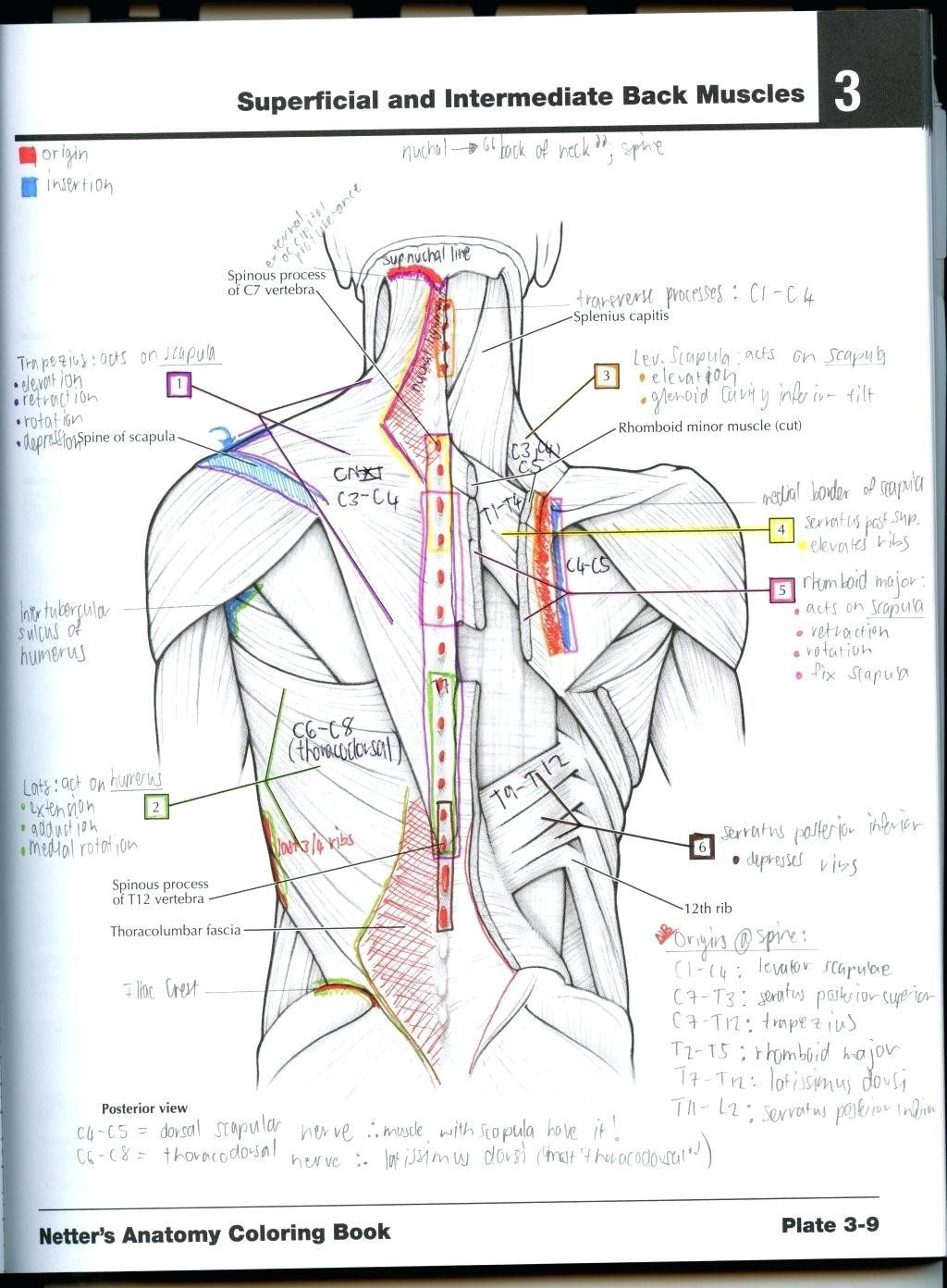 Anatomy Coloring Book Pdf Luxury Coloring Pages 39 the
