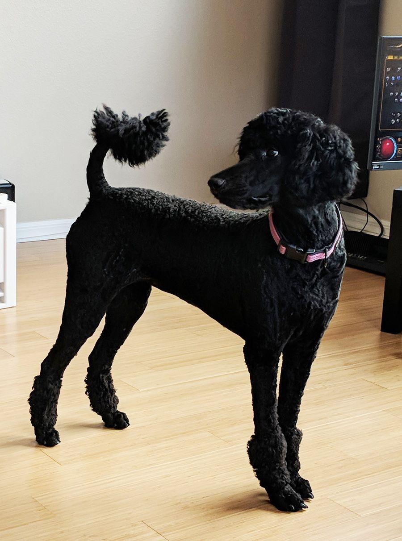 Positive Puppy Training Basics Dog Training Dog Clicker