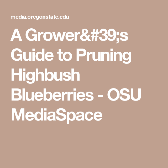 A Grower's Guide to Pruning Highbush Blueberries - OSU