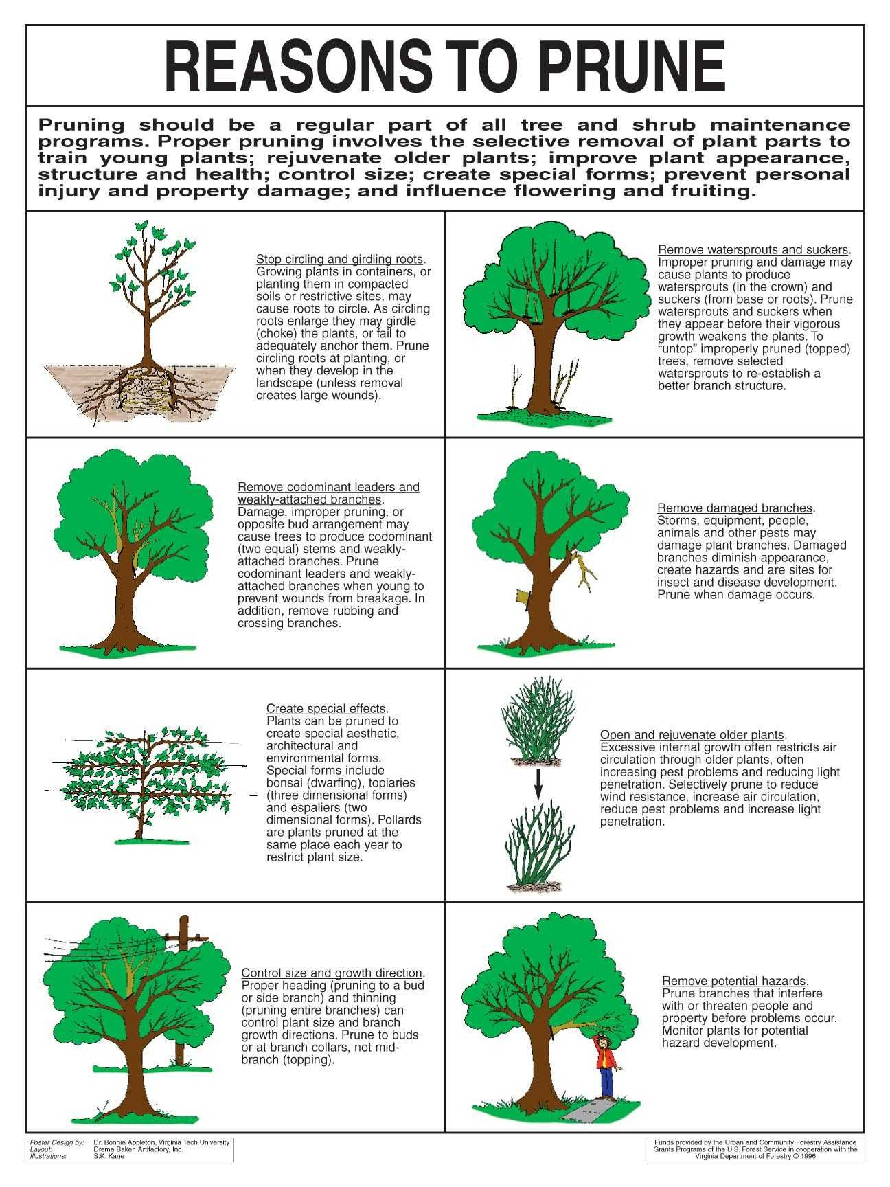 Jeanine Great Tree Planting And Care Information Trees To Plant Tree Care Pruning Fruit Trees