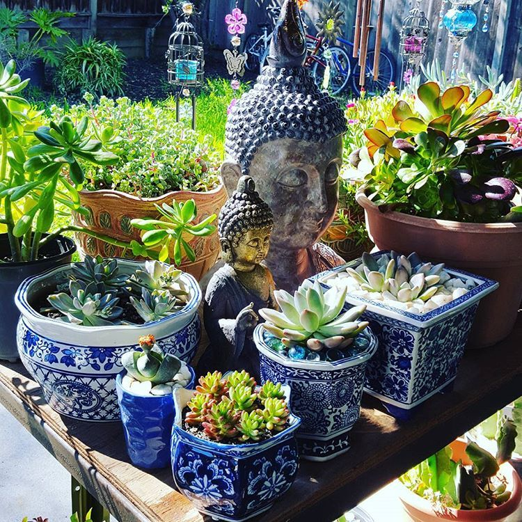 House Plants For Shady Rooms: M💙nday Plants Shelfie 💙🌞 #succulents #succulentobsessed