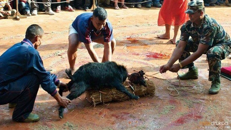 the violation of animal rights A strong advocate of animal rights is the people for the ethical treatment of animals or peta in the unites states, there are plenty of organizations that uphold animal rights and where volunteers can join in to offer support.