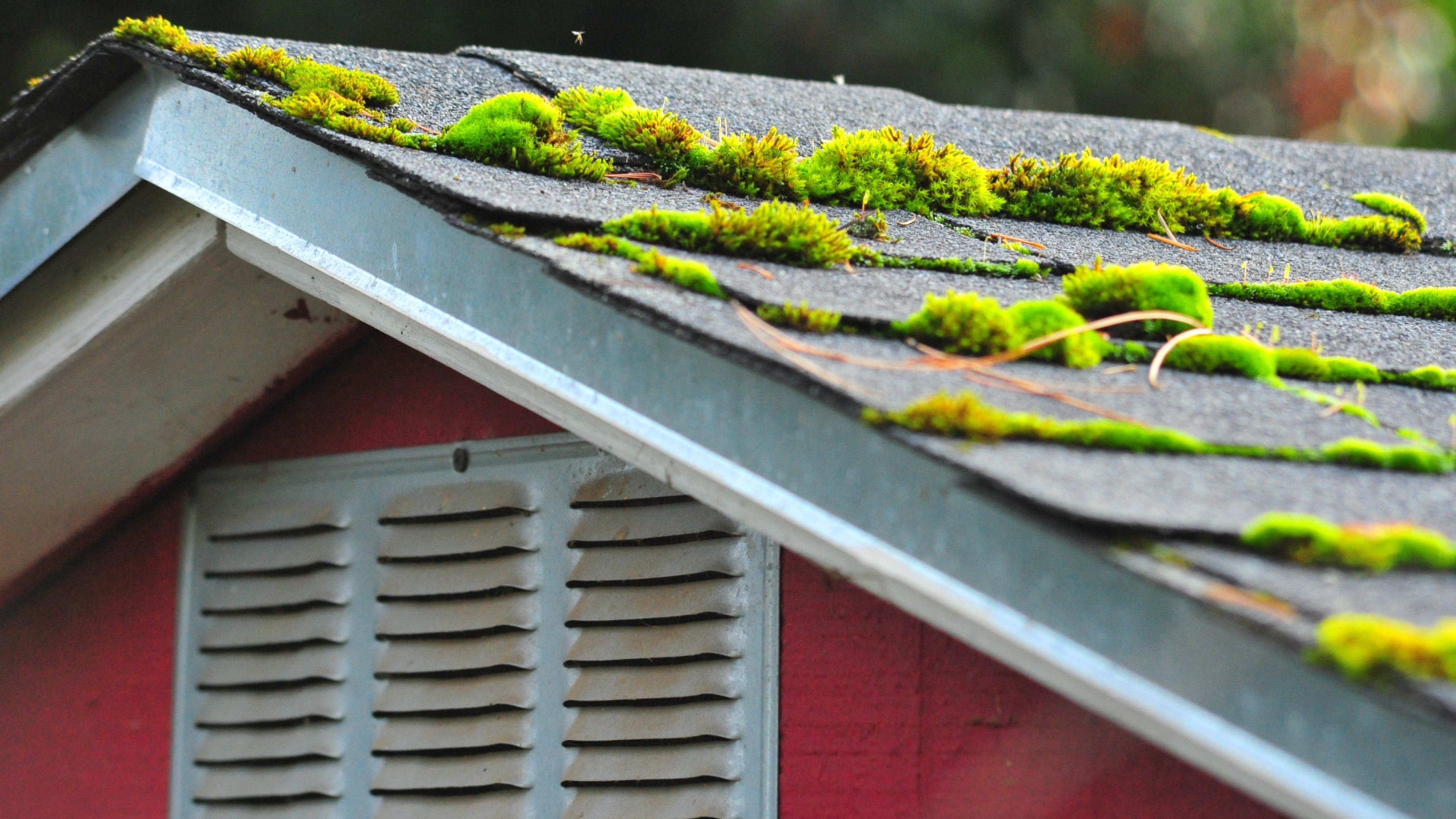 Best Way To Treat Roof Moss In 2020 Moss Removal Brick Patios Roof Cleaning