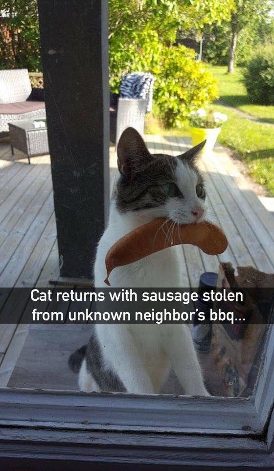 22 Katzen, die, wenn wir ehrlich sind, Arschlöcher - humorvoll   - Cutees - #Arschlöcher #Cutees #die #ehrlich #Humorvoll #Katzen #sind #wenn #wir #funnykittens