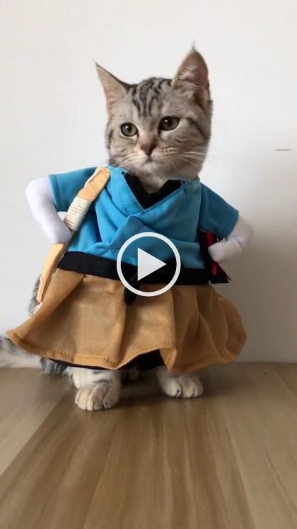 Cat fashion show  #cutecats #fashion #gif