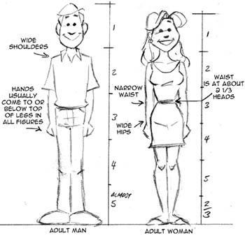 Basic Cartoon Proportions in 2020   Cartoon body, Cartoon ...