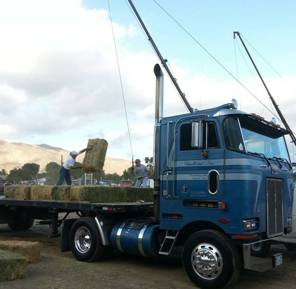 courtesy Carrillo & Sons Trucking Peterbilt 362 2 axle