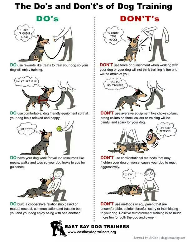Pin By Karen Levin On Australian Cattle Dogs Rule My World Dog Training Training Your Dog Dog Training Obedience
