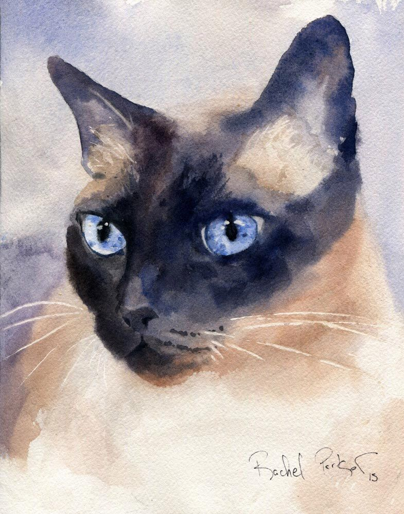 Print Applehead Siamese Cat Art Print Of A Watercolor Painting Big