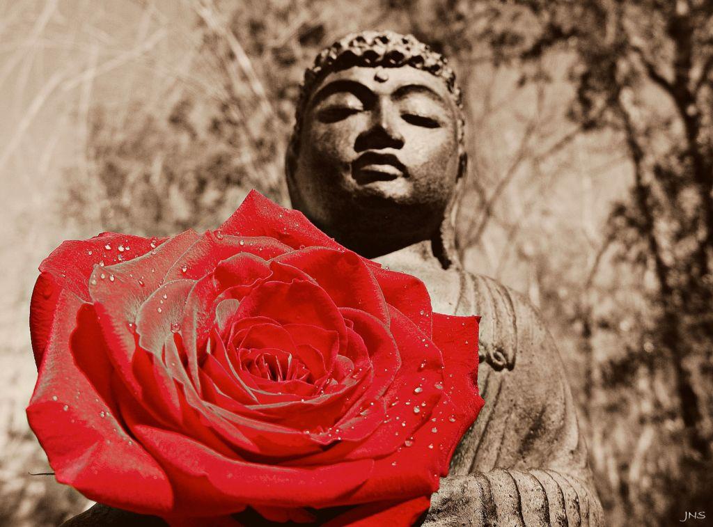 """""""A jug fills drop by drop."""" ~ Buddha"""