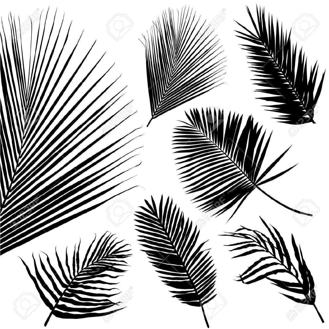 Feuille de palmier palm feuille transparente patron - Palmier dessin ...