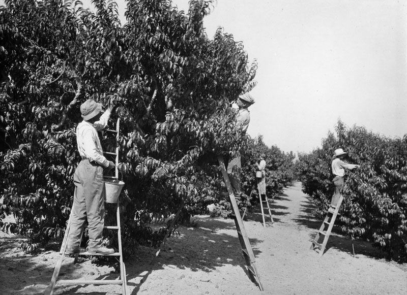 When The San Fernando Valley Was Rural San Fernando Valley California History San Luis Obispo County