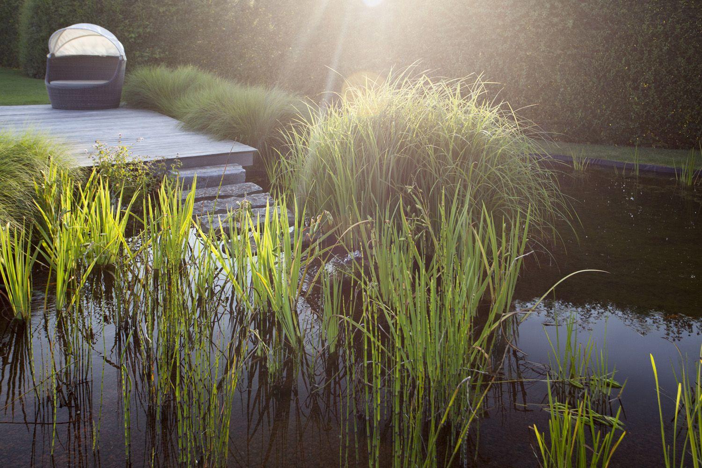 De filterzone van deze zwemvijver ziet er wel heel prachtig uit in zijn herfstjas.