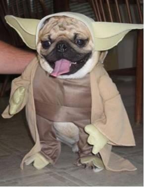 20 Pugs Dressed As Yoda Darth Vader Pet Costumes Dog