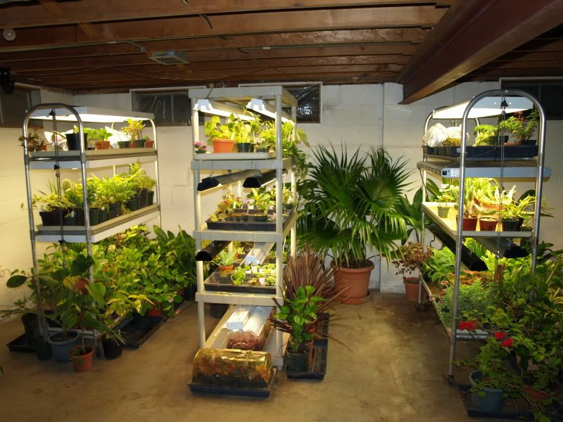 Great Grow Light Setup Thread On Gardenweb Awesome Would Love To Be Able To Do This So Indoor Vegetable Gardening Hydroponic Gardening Growing Food Indoors