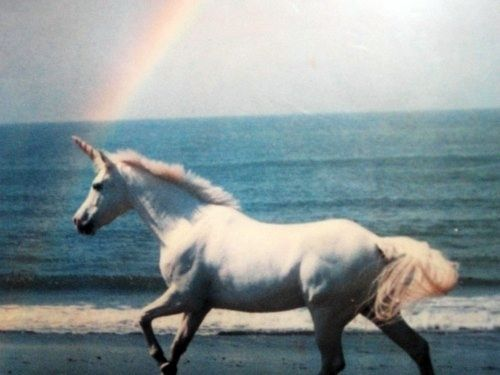 Unicorns Animals Horses Unicorn