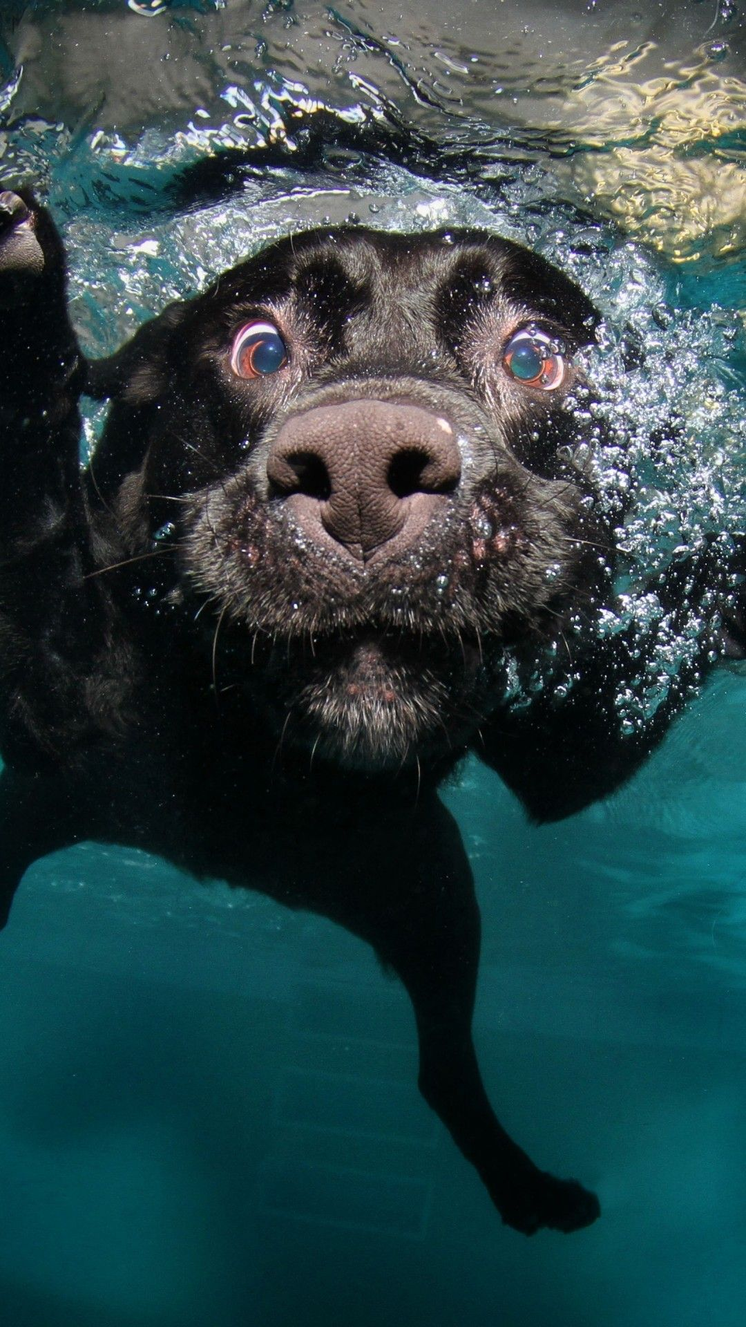 Dog Wallpaper Mobile Dog Wallpapers Underwater Dogs Cute Baby
