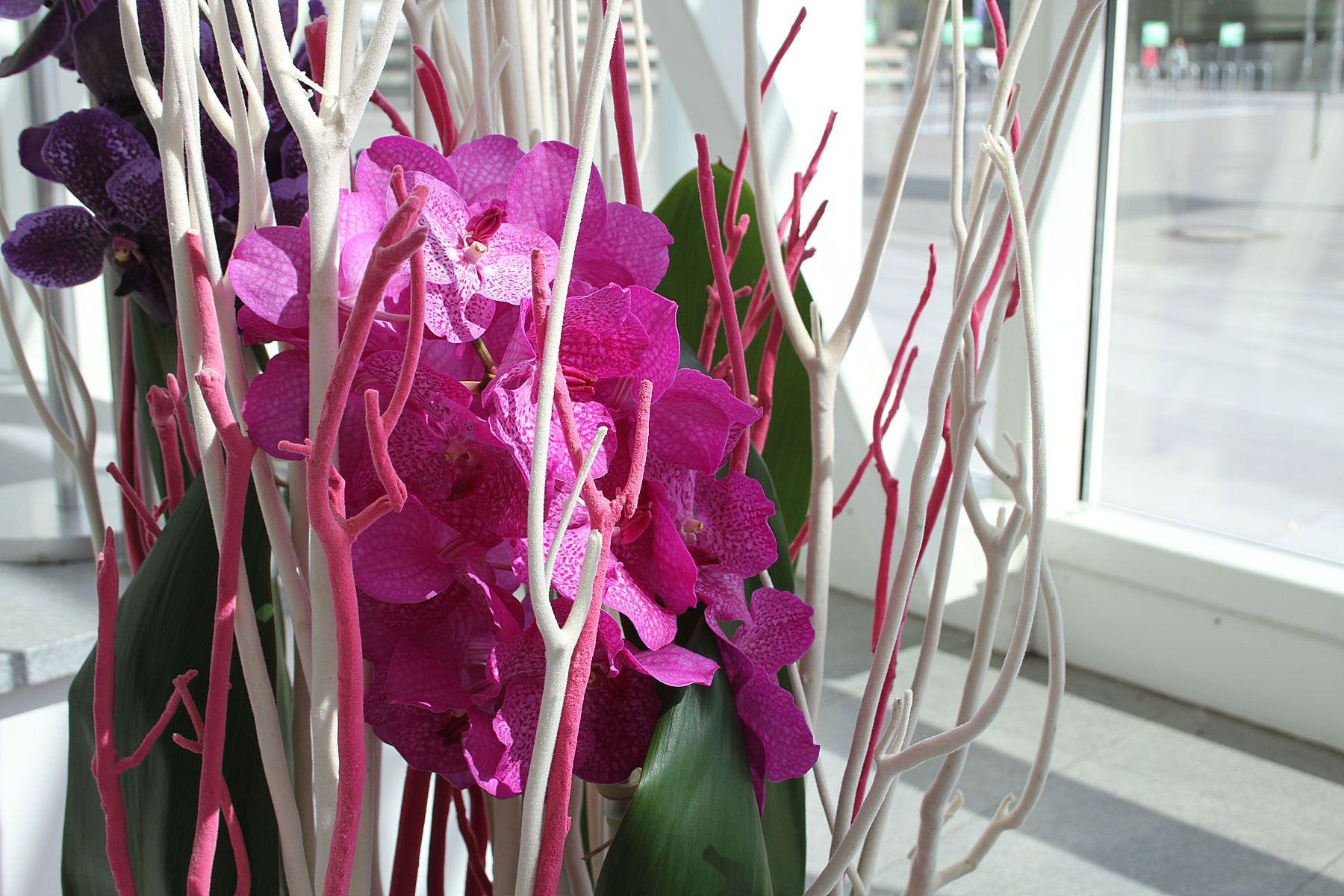Wachsen Und Eignen Sich Gut Fur Die Dekoration Von Hohen Raumen Raumwirkung Zeigen Grosse Bluten In Kraftigem Violett U Orchideen Bodenvase Dekorieren Pflanzen