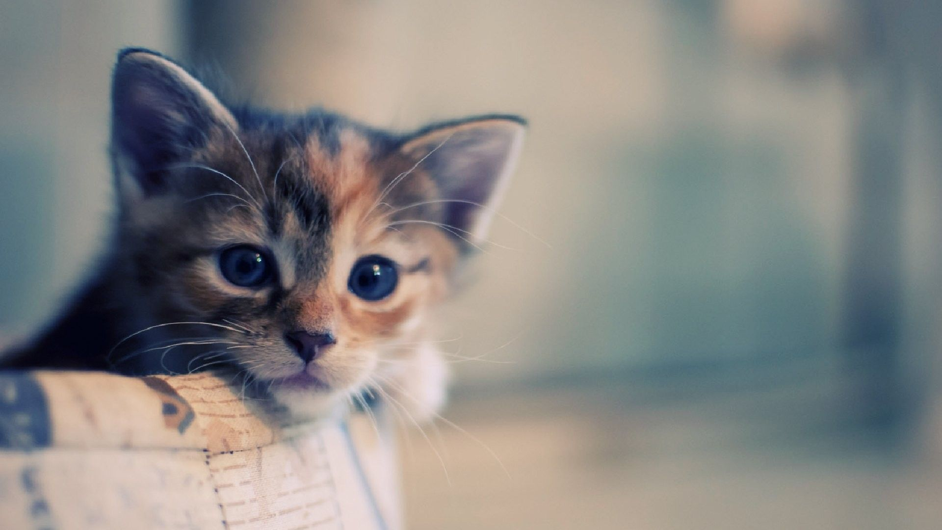 Cute Kittens Wallpapers 1920×1080 Cute Cat Pictures
