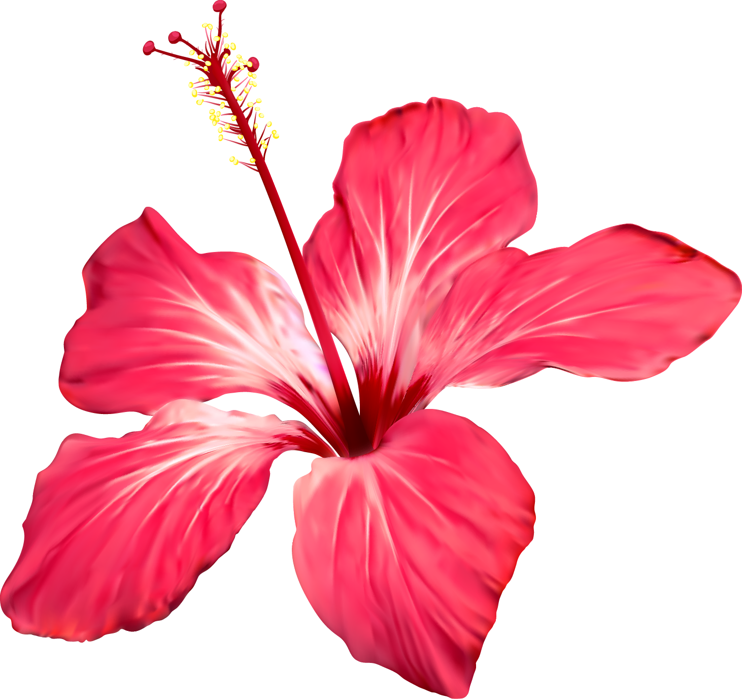 Image Result For Flor Cayena Vector Flower Drawing Watercolor Flowers Hibiscus Flowers