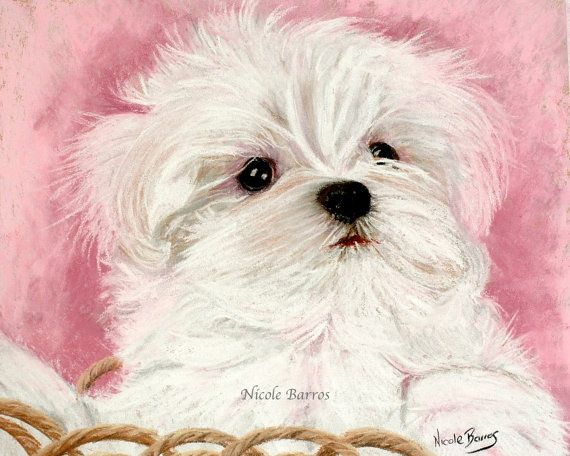 Maltese Dog Maltese Puppy Maltese Painting Print Animal Art