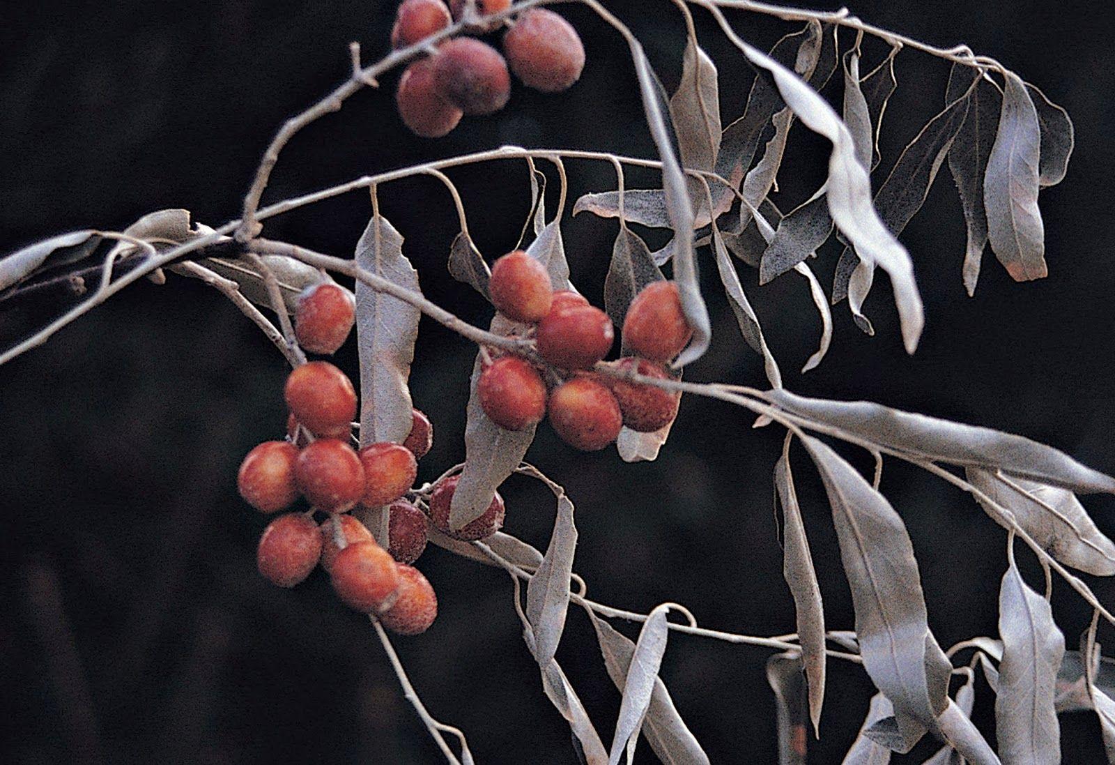 Nolin River Nut Tree Nursery