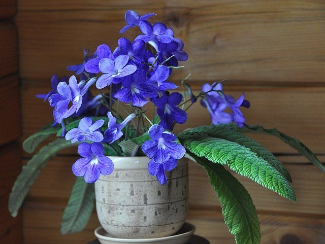 the houseplants in this list are special they are bold and pretty some of