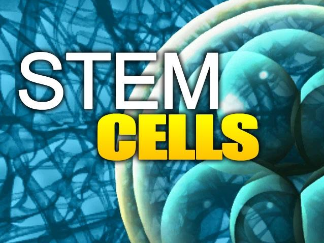 Cartilage Grown From Stem Cells Could Replace Hip Implants Stem Cell Therapy Stem Cells Stem Cell Research