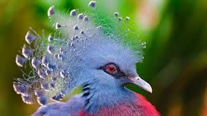 birds - Buscar con Google