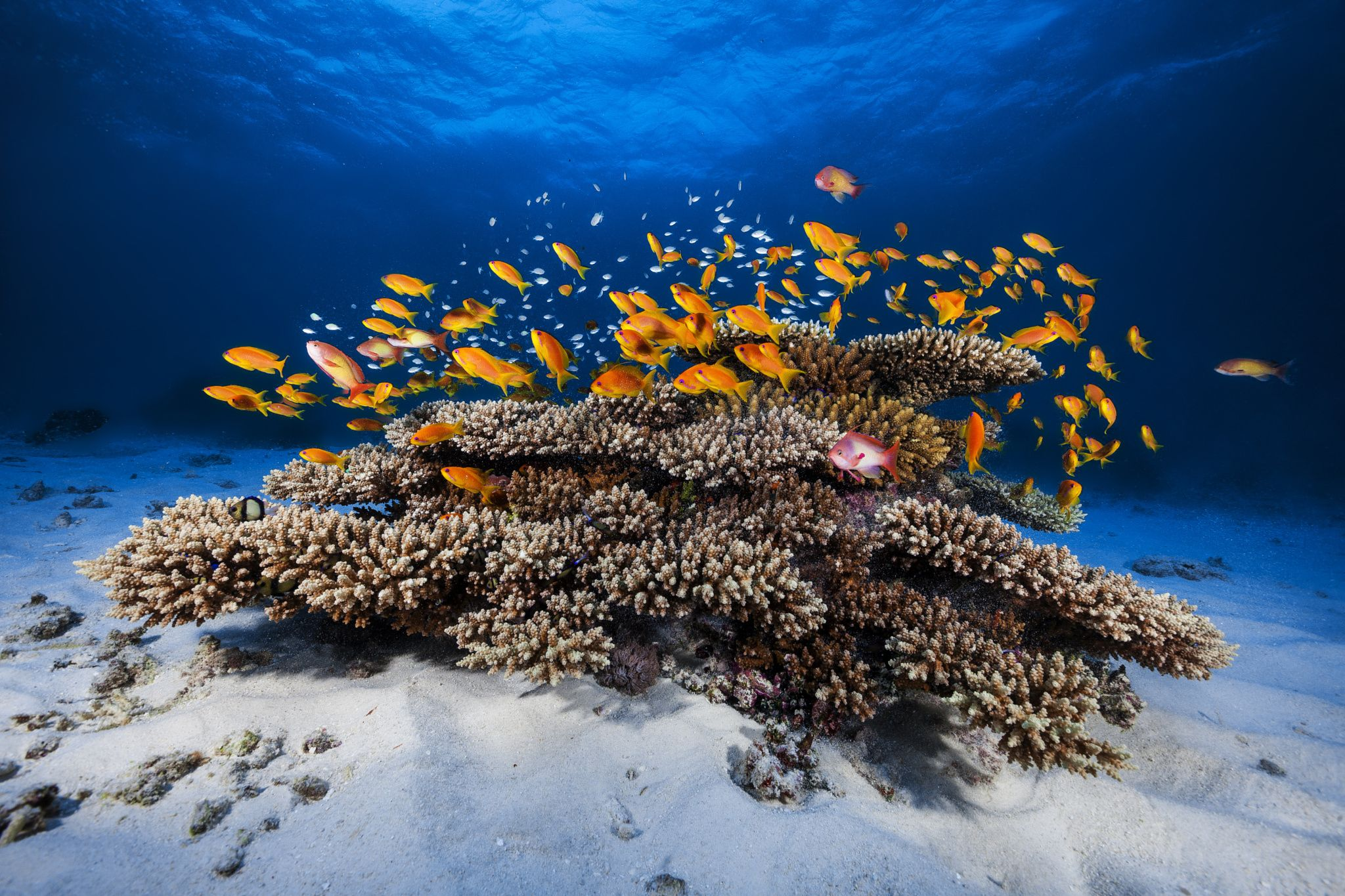 Marine life by Gaby Barathieu on 500px