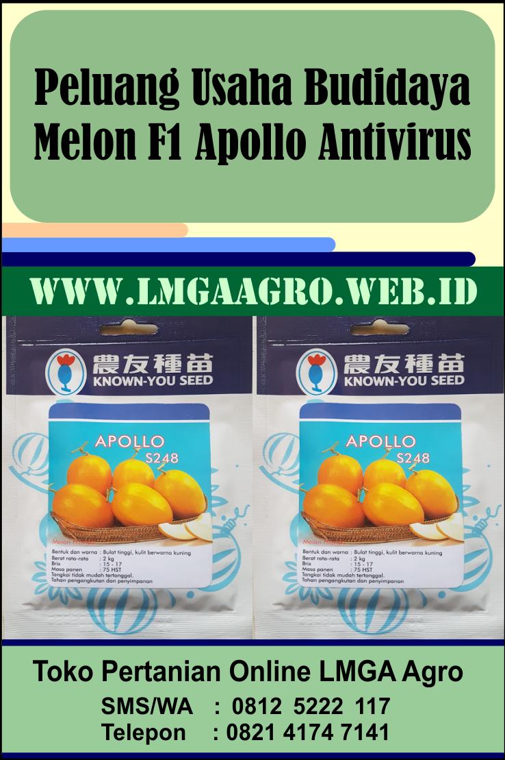 Peluang Usaha Budidaya Melon F1 Apollo Antivirus Di 2021 Melon Buah Pertanian Organik