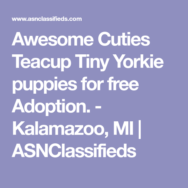 Awesome Cuties Teacup Tiny Yorkie puppies for free Adoption