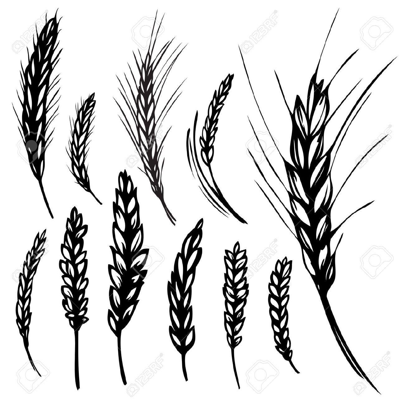 Rye Wheat Illustration