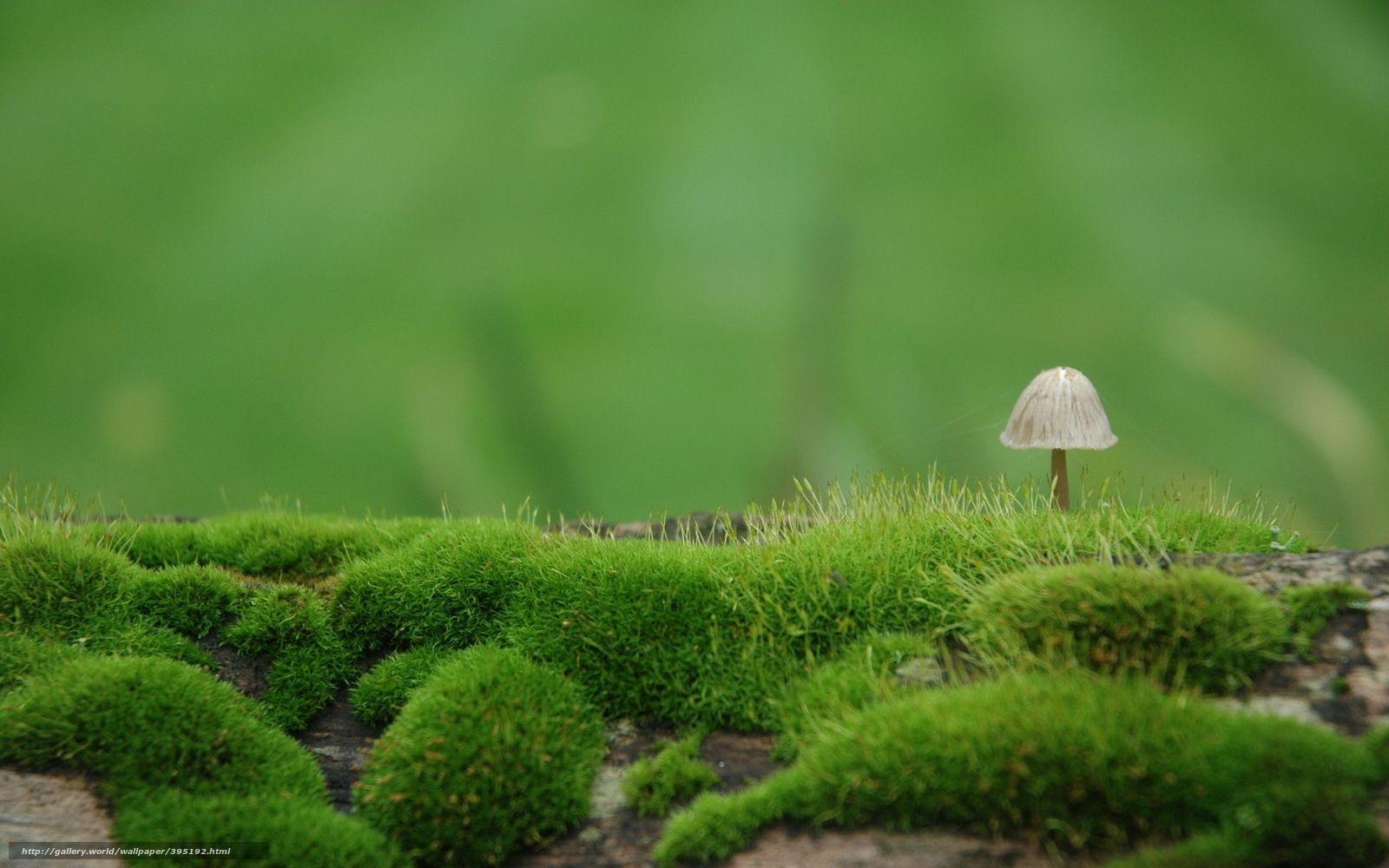 Tlcharger Fond d'ecran champignon,  mousse,  Nature Fonds d'ecran gratuits pour votre rsolution du bureau 1680x1050 — image №395192