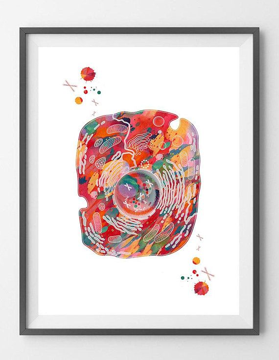 Eukaryotic Cell Art Print Human Cell Structure Watercolor Eukaryote