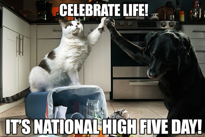 Something We Can All Appreciate Send A Pal A Virtual High Five Funny Animals Funny Animal Pictures Animal Pictures