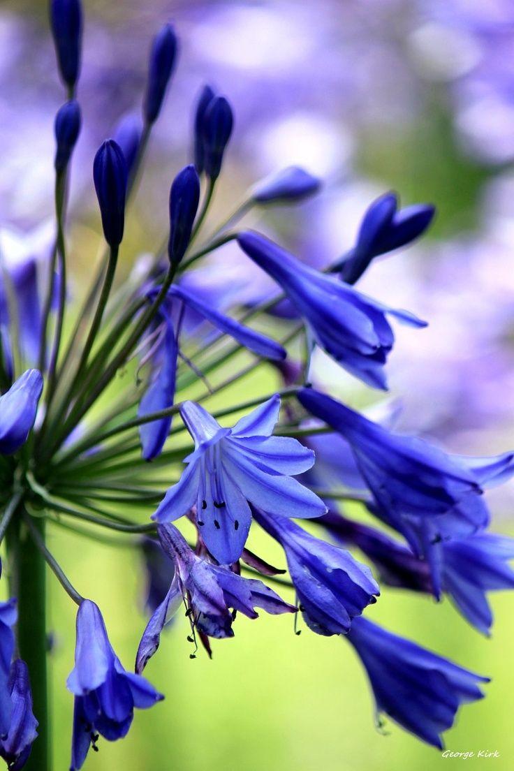 Purple Haze By Georg Beautiful Gorgeous Pretty Flowers Nature
