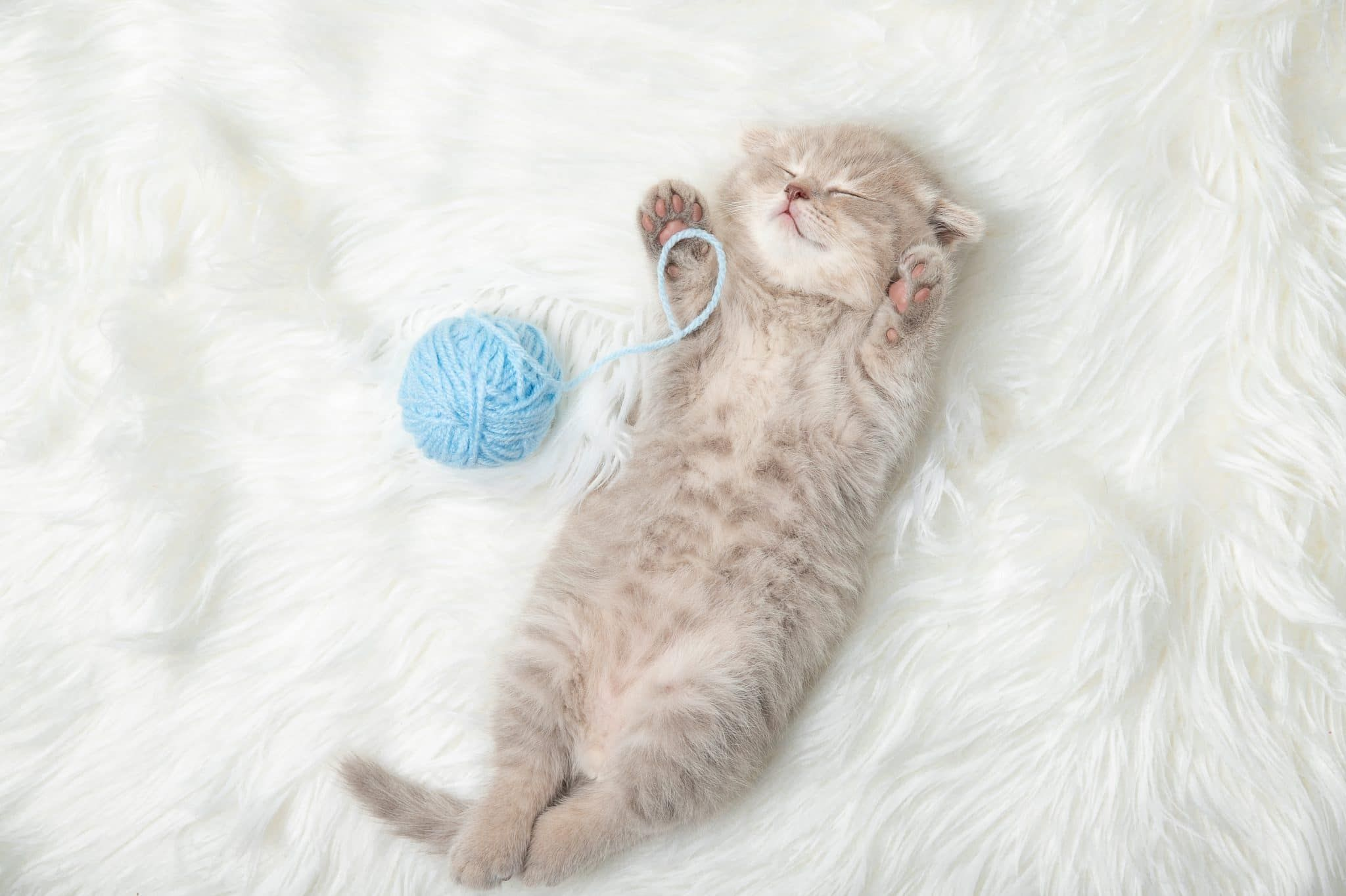 Kittens Sleep Together In Their Own Bed The Dodo Youtube This Is So Stinkin Cute No Wonder So Many People Love Ca Sleeping Kitten Kittens Cat Sleeping