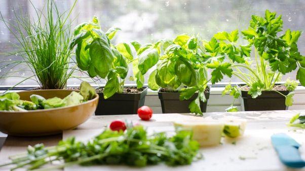 Top Tips For Indoor Growing Jade Plants Growing Herbs 400 x 300