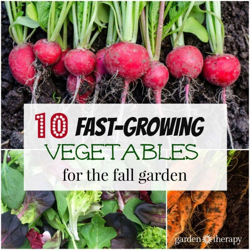 Fall Vegetable Gardening 5 Things To Plant Now: The Fastest Growing Vegetables To Grow #vegetable